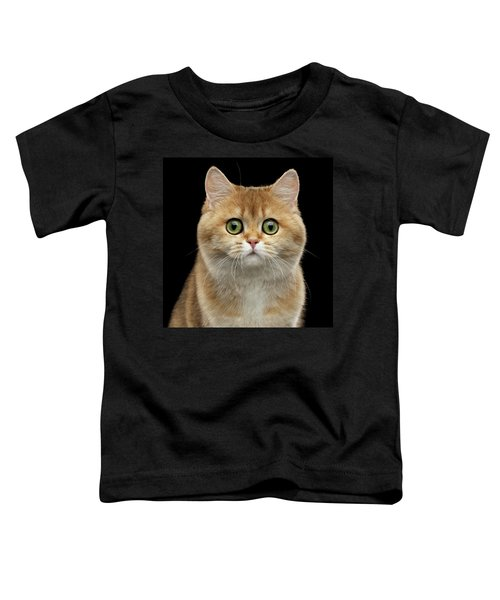 Close-up Portrait Of Golden British Cat With Green Eyes Toddler T-Shirt