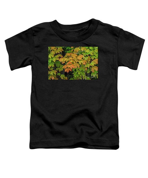 Various Stages Of Fall Color On Maple Leaves Toddler T-Shirt