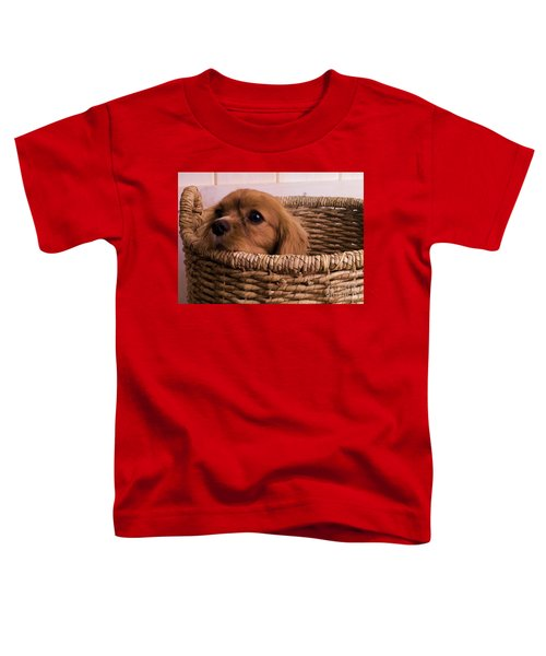Cavalier King Charles Spaniel Puppy In Basket Toddler T-Shirt