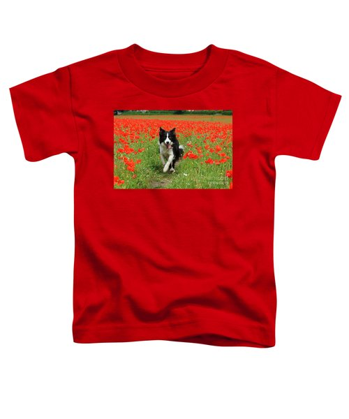Border Collie In Poppy Field Toddler T-Shirt