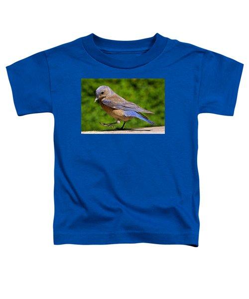 Dancing Western Bluebird  Toddler T-Shirt
