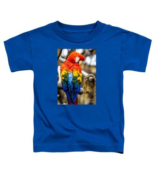 Preening Scarlet Macaw Toddler T-Shirt