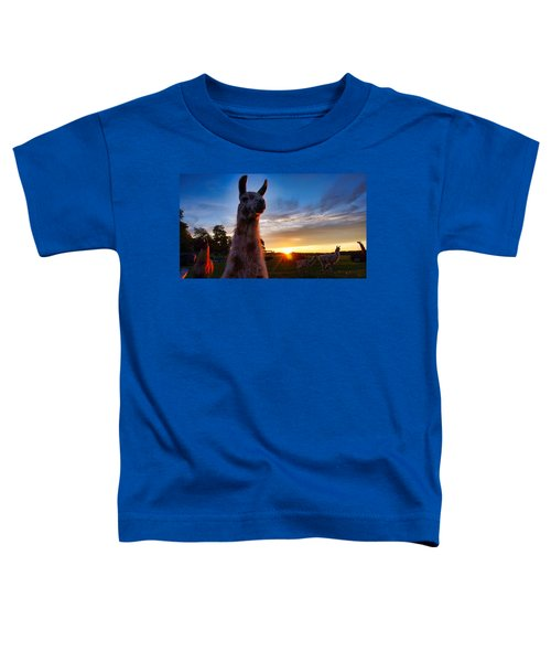 Drama Llamas Toddler T-Shirt