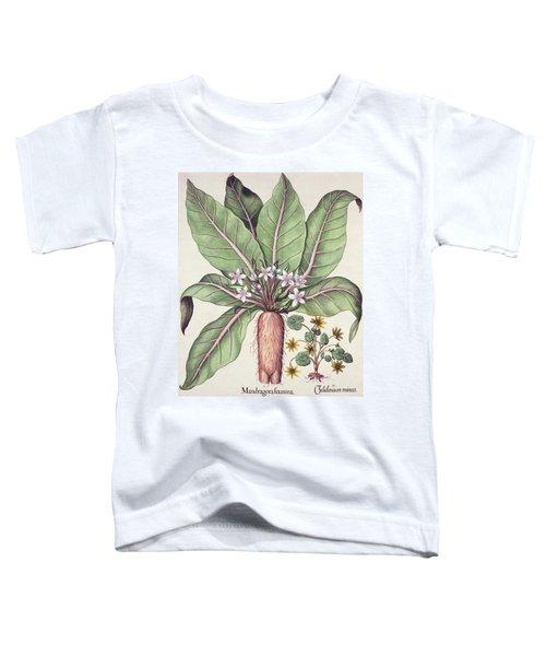 Autumn Mandrake Toddler T-Shirt