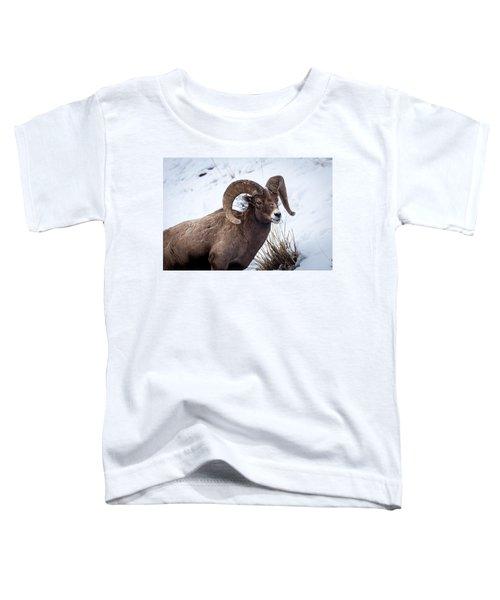 Bighorn Ram Toddler T-Shirt
