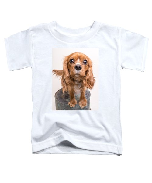Cavalier King Charles Spaniel Puppy Toddler T-Shirt