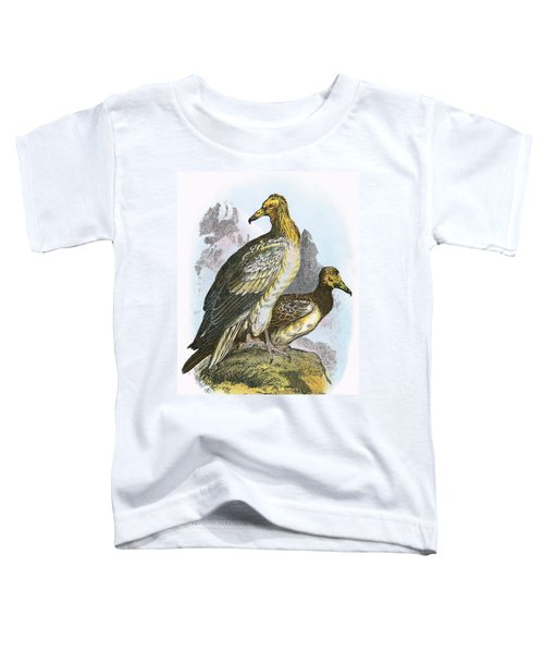 Egyptian Vulture Toddler T-Shirt by English School