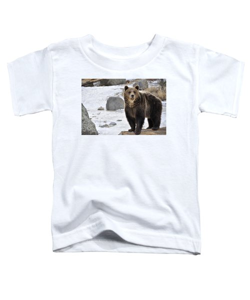 Montana Grizzly  Toddler T-Shirt