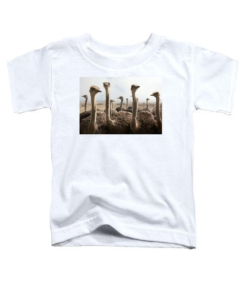 Ostrich Heads Toddler T-Shirt by Johan Swanepoel