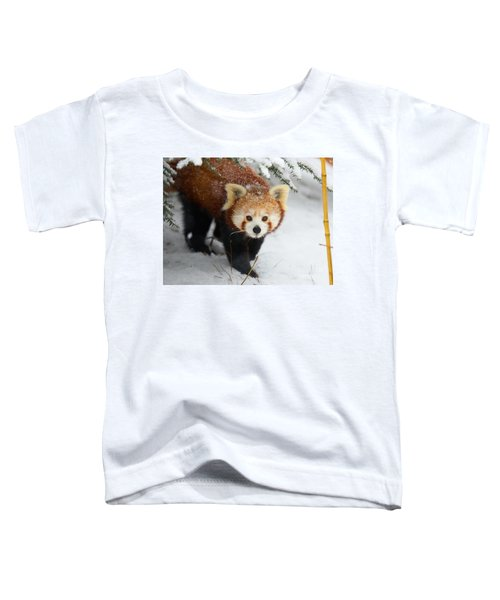Red Panda In The Snow Toddler T-Shirt