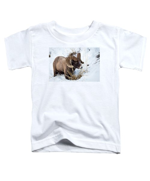 Rocky Mountain Bighorn Sheep Toddler T-Shirt