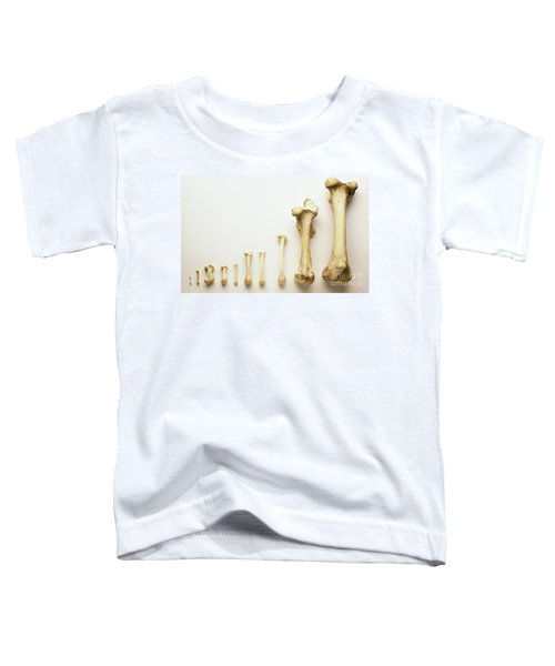 Thigh Bones From Different Animals Toddler T-Shirt