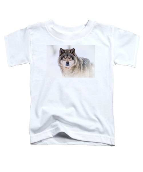 Timber Wolf Pictures 256 Toddler T-Shirt