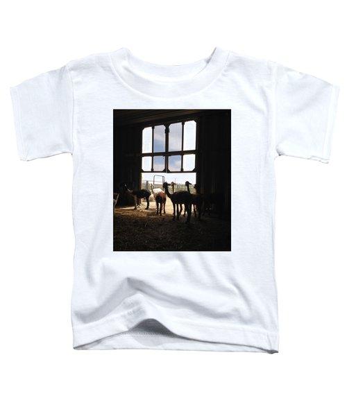 Alpaca  Toddler T-Shirt