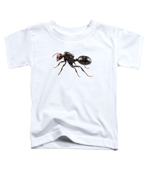 Black Garden Ant Species Lasius Niger Toddler T-Shirt