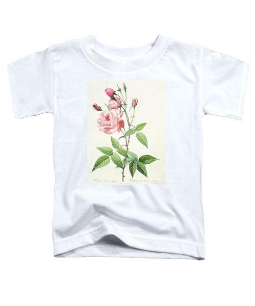 Rosa Indica Vulgaris Toddler T-Shirt