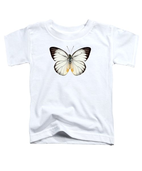 White Butterfly Species Delias Baracasa Toddler T-Shirt