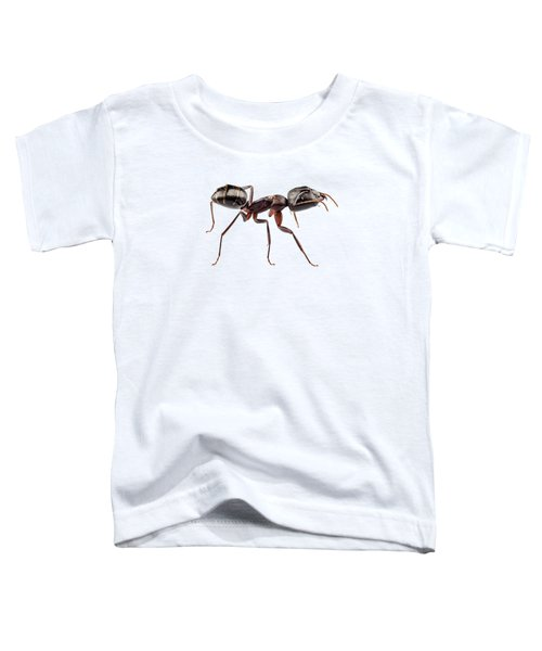 Carpenter Ant Species Camponotus Vagus Toddler T-Shirt