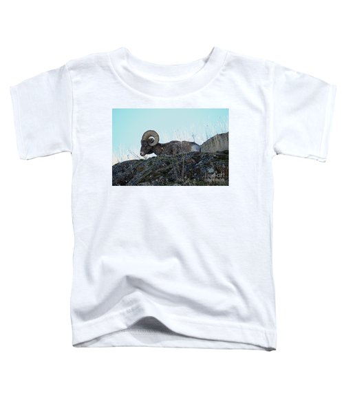 Bighorn Sheep Toddler T-Shirt