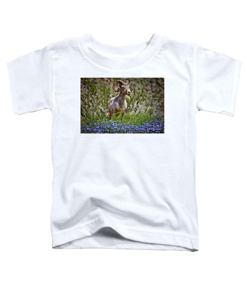 Blooms And Bighorn In Anza Borrego Desert State Park  Toddler T-Shirt