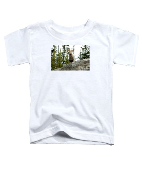 Canadian Bighorn Sheep Toddler T-Shirt