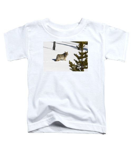 Coyote In Winter Toddler T-Shirt