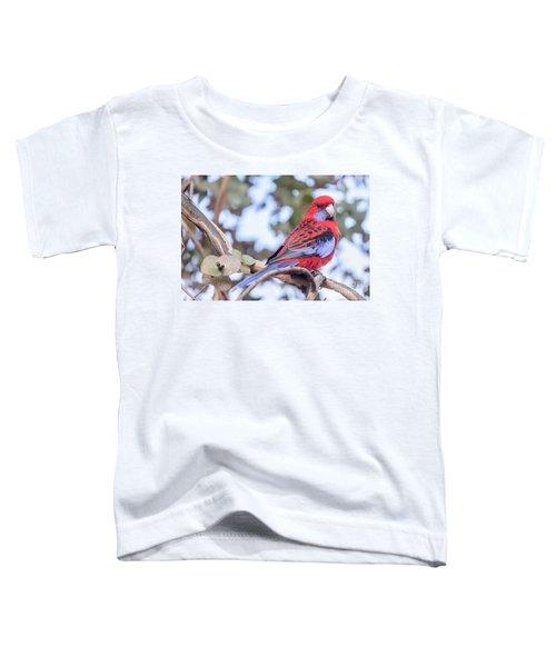 Crimson Rosella 03 Toddler T-Shirt