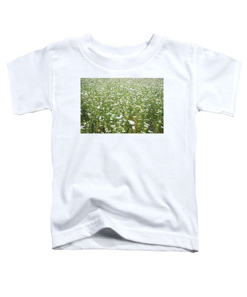 Field Of Queen Annes Lace Toddler T-Shirt