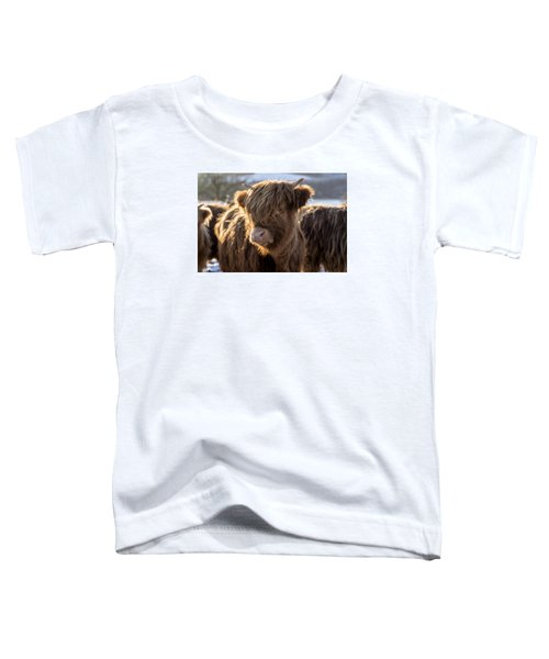 Highland Baby Coo Toddler T-Shirt by Jeremy Lavender Photography
