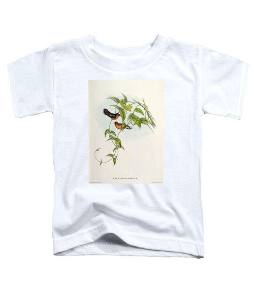 Leucippus Fallax Toddler T-Shirt by John Gould