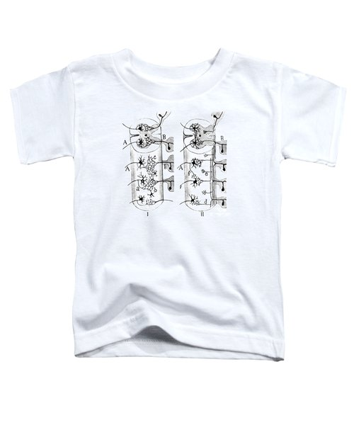 Neuroglia Cells Illustrated By Cajal Toddler T-Shirt