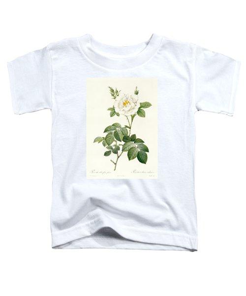 Rosa Alba Flore Pleno Toddler T-Shirt