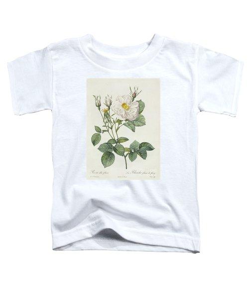 Rosa Alba Foliacea Toddler T-Shirt