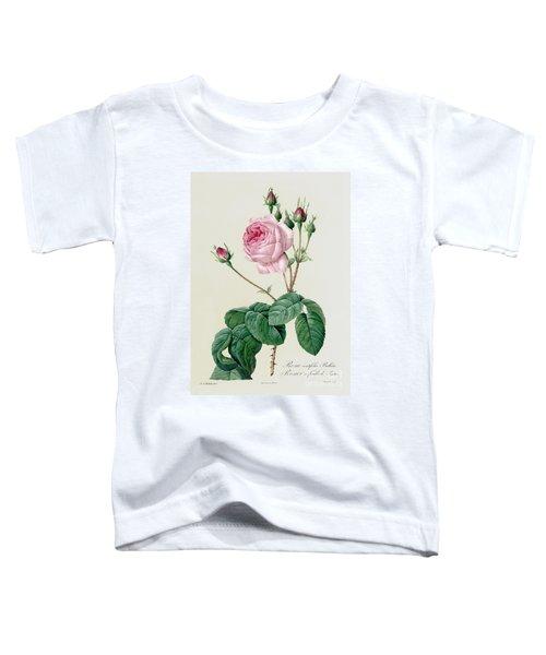 Rosa Centifolia Bullata Toddler T-Shirt