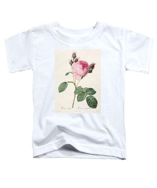 Rosa Centifolia Toddler T-Shirt