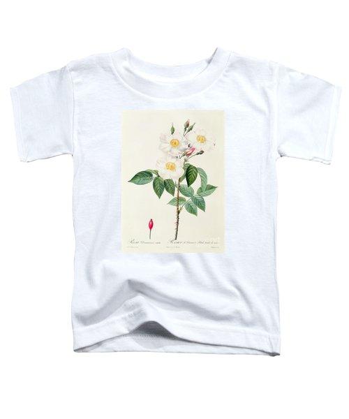 Rosa Damascena Subalba Toddler T-Shirt