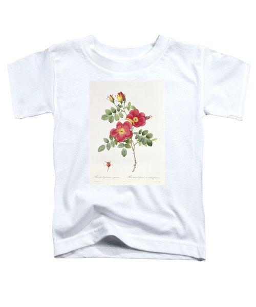 Rosa Eglantera Punicea Toddler T-Shirt