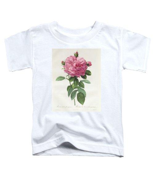 Rosa Gallica Flore Giganteo Toddler T-Shirt