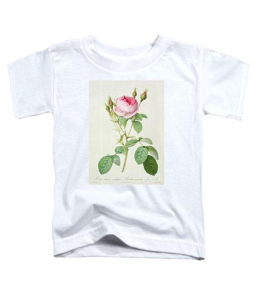 Rosa Muscosa Multiplex Toddler T-Shirt