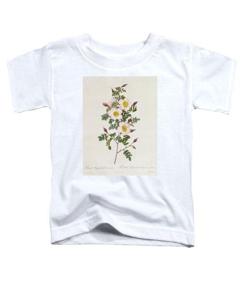 Rosa Pimpinelli Folia Inermis Toddler T-Shirt