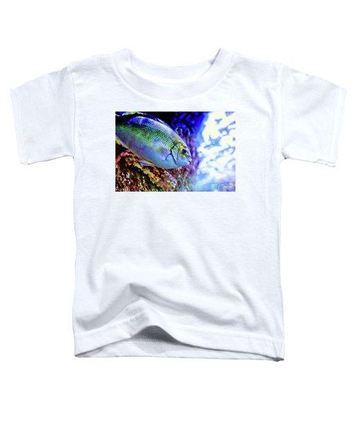 Splash Of Color Toddler T-Shirt