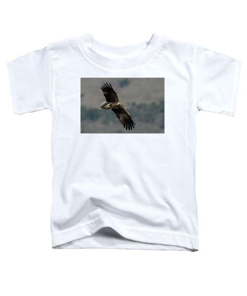 Egyptian Vulture, Sub-adult Toddler T-Shirt