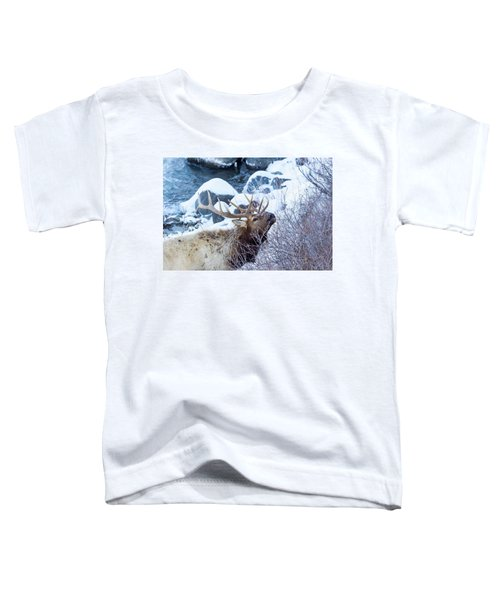 Grazing Elk Toddler T-Shirt
