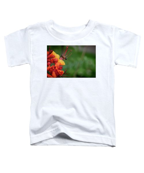 Honey Bee Extraction Toddler T-Shirt