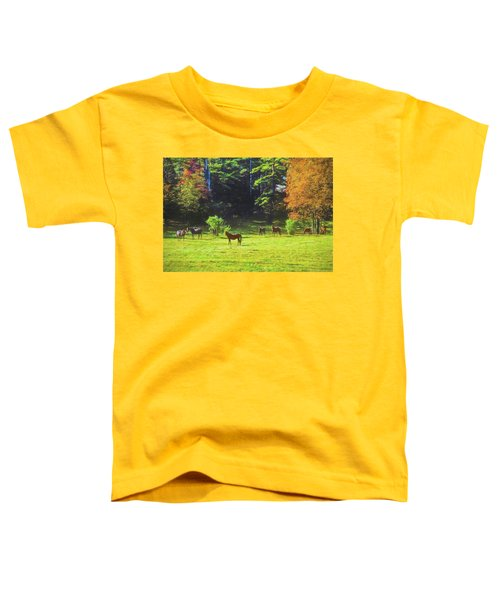 Morgan Horses In Autumn Pasture Toddler T-Shirt