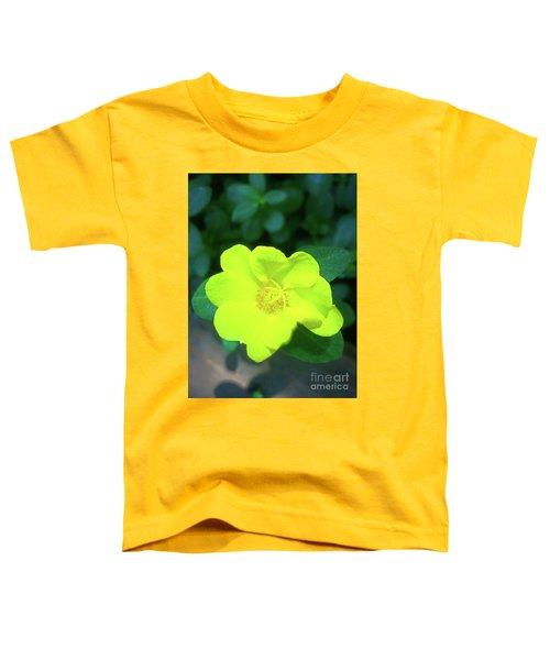 Yellow Hypericum - St Johns Wort Toddler T-Shirt