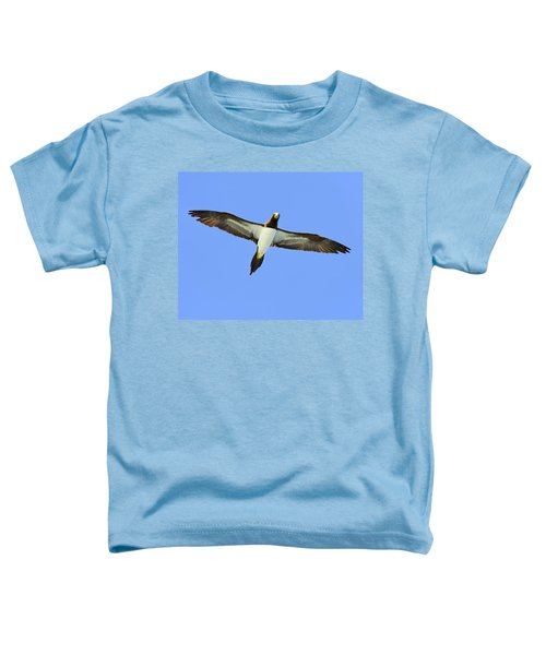 Brown Booby Toddler T-Shirt by Tony Beck