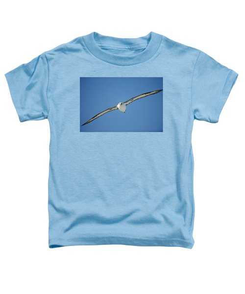 Laysan Albatross Soaring Hawaii Toddler T-Shirt by Tui De Roy