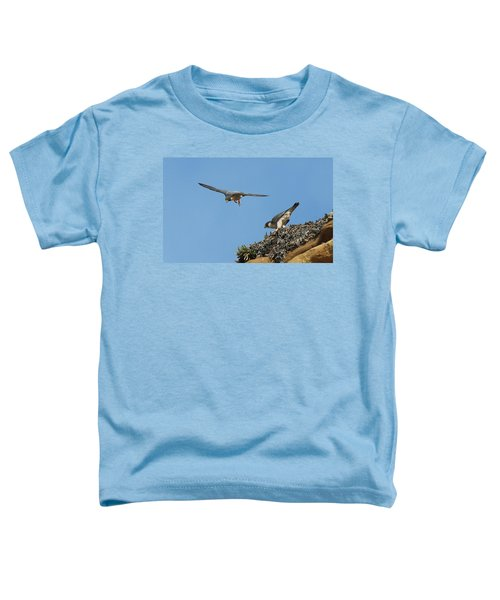 Peregrine Falcons - 6  Toddler T-Shirt