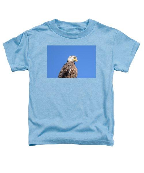 Bald Eagle Juvenile Perched Toddler T-Shirt